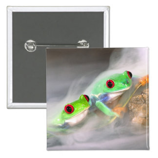 Red Eye Treefrog in the mist, Agalychinis 2 2 Inch Square Button