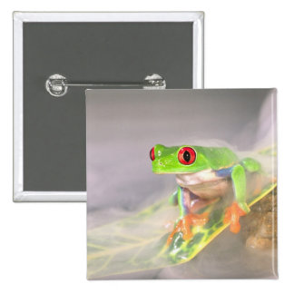 Red Eye Treefrog in the mist, Agalychinis 2 Inch Square Button