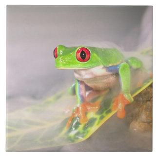 Red Eye Treefrog in the mist, Agalychinis Ceramic Tile