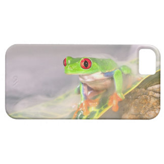 Red Eye Treefrog in the mist, Agalychinis iPhone SE/5/5s Case
