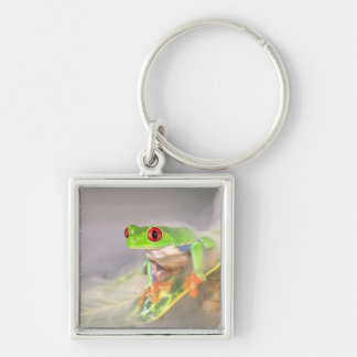 Red Eye Treefrog in the mist, Agalychinis Keychain