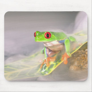 Red Eye Treefrog in the mist, Agalychinis Mouse Pad