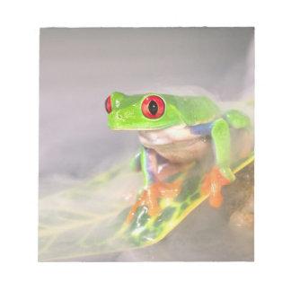 Red Eye Treefrog in the mist, Agalychinis Note Pad