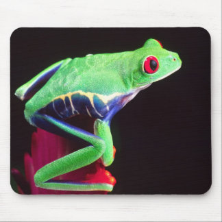 Red Eye Treefrog on a Bromeliad, Agalychinis Mouse Pad