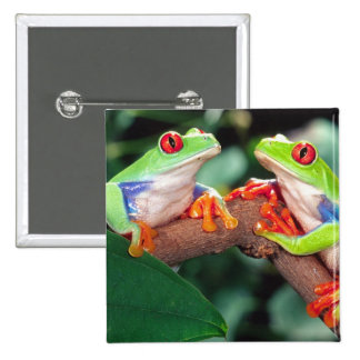 Red Eye Treefrog Pair, Agalychinis callidryas, 2 Inch Square Button