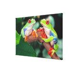 Red Eye Treefrog Pair, Agalychinis callidryas, Canvas Print