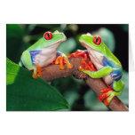 Red Eye Treefrog Pair, Agalychinis callidryas, Card