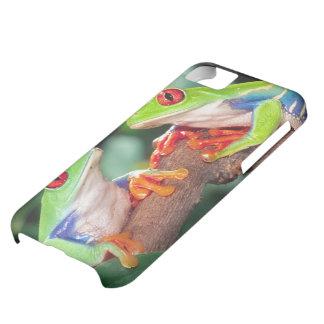 Red Eye Treefrog Pair, Agalychinis callidryas, iPhone 5C Case