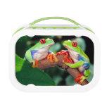 Red Eye Treefrog Pair, Agalychinis callidryas, Lunch Box