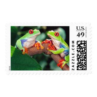 Red Eye Treefrog Pair, Agalychinis callidryas, Stamp