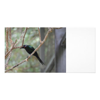 red eyed bird looking down card