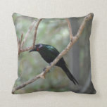 red eyed bird looking down pillows
