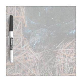 red eyed box turtle reptile animal Dry-Erase board