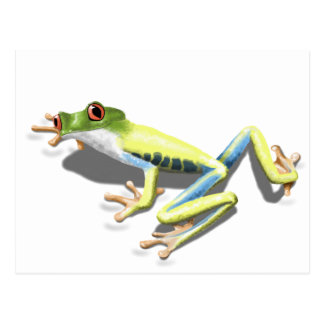 Red Eyed Frog Postcard
