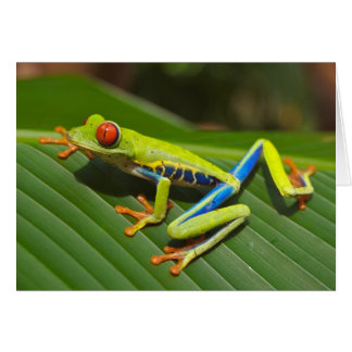 Red Eyed Green Tree Frog Card