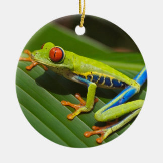 Red Eyed Green Tree Frog Ceramic Ornament