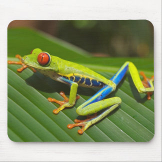 Red Eyed Green Tree Frog Mouse Pad