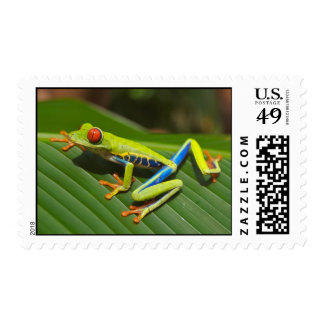 Red Eyed Green Tree Frog Postage Stamp