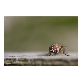 Red-eyed house fly closeup photo art