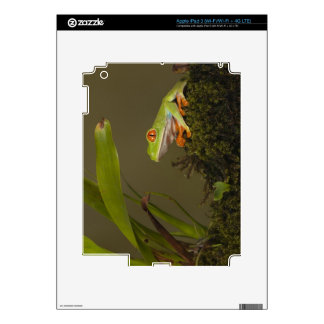 Red-eyed Leaf Frog, AKA Red-eyed Tree frog iPad 3 Decals