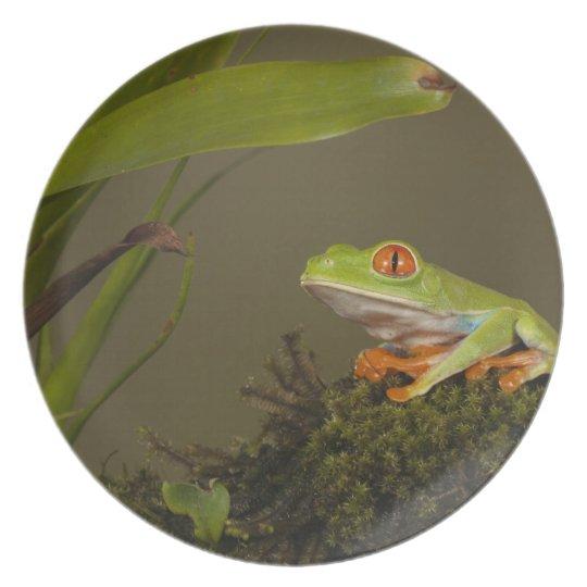 Red-eyed Leaf Frog, AKA Red-eyed Tree frog Melamine Plate