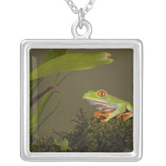 Red-eyed Leaf Frog, AKA Red-eyed Tree frog Silver Plated Necklace