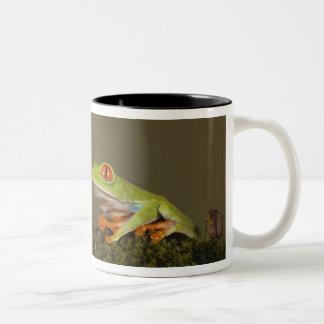 Red-eyed Leaf Frog, AKA Red-eyed Tree frog Two-Tone Coffee Mug