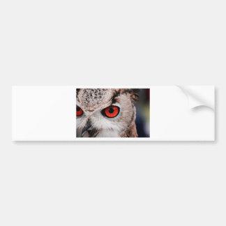Red-Eyed Owl Bumper Sticker