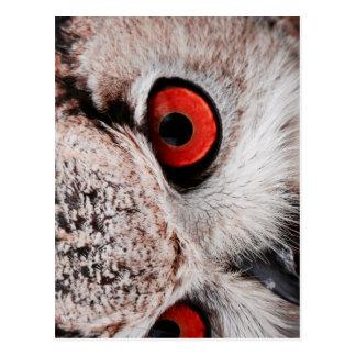 Red-Eyed Owl Postcard