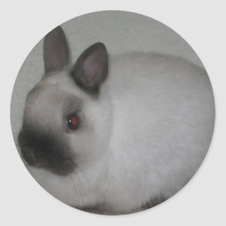 Red Eyed  Rabbit Classic Round Sticker