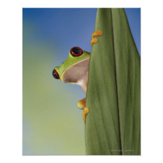Red Eyed Tre Frog Peeking From Behind a Leaf Poster
