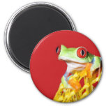 red eyed tree frog 2 inch round magnet