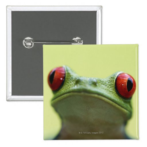 Red-eyed tree frog (Agalychnis callidryas) 2 2 Inch Square Button