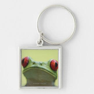 Red-eyed tree frog (Agalychnis callidryas) 2 Keychain