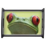 Red-eyed tree frog (Agalychnis callidryas) 2 Service Trays