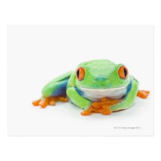 Red-Eyed Tree Frog (Agalychnis Callidryas) 2 Postcard