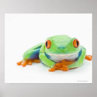 Red-Eyed Tree Frog (Agalychnis Callidryas) 2 Print