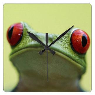 Red-eyed tree frog (Agalychnis callidryas) 2 Square Wall Clock