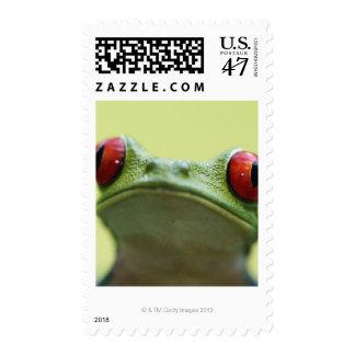 Red-eyed tree frog (Agalychnis callidryas) 2 Stamp