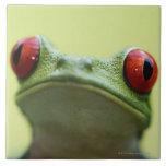 Red-eyed tree frog (Agalychnis callidryas) 2 Large Square Tile