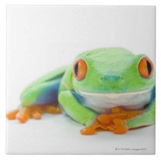Red-Eyed Tree Frog (Agalychnis Callidryas) 2 Tile