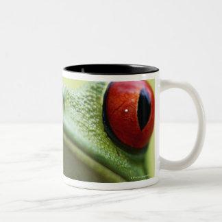 Red-eyed tree frog (Agalychnis callidryas) 2 Two-Tone Coffee Mug
