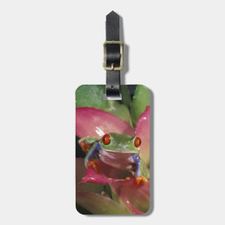 Red-eyed tree frog Agalychnis callidryas) Bag Tag