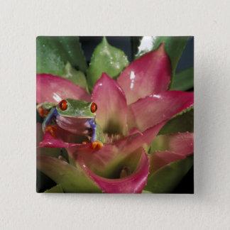 Red-eyed tree frog Agalychnis callidryas) Button