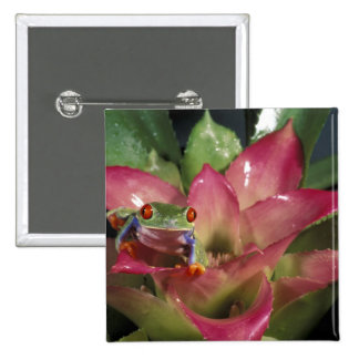 Red-eyed tree frog Agalychnis callidryas) 2 Inch Square Button