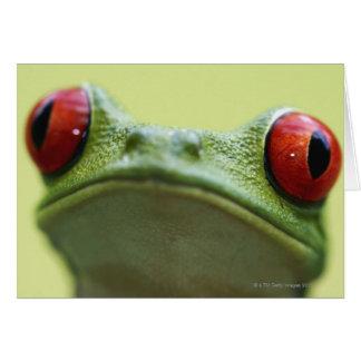 Red-eyed tree frog (Agalychnis callidryas) Card