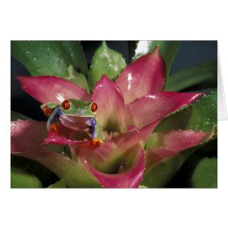 Red-eyed tree frog Agalychnis callidryas) Card