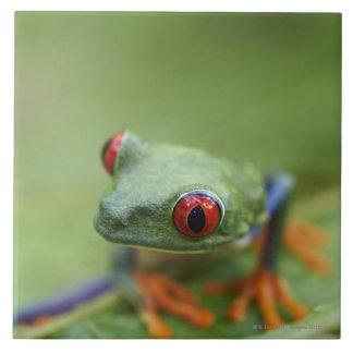 Red-eyed tree frog (Agalychnis callidryas) Ceramic Tile