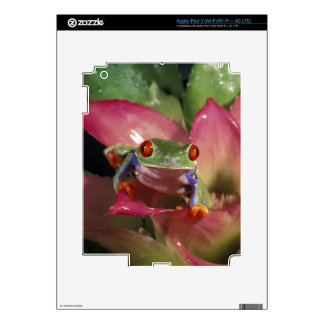 Red-eyed tree frog Agalychnis callidryas) Decals For iPad 3