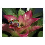 Red-eyed tree frog Agalychnis callidryas) Greeting Card